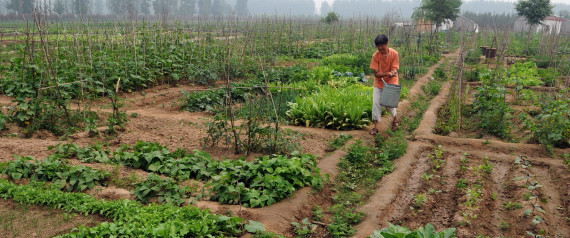UN Report Says Small-Scale Organic Farming Only Way To Feed The World
