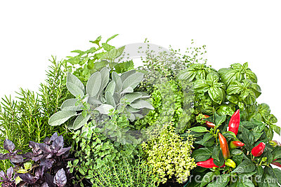 fresh-kitchen-herbs-isolated-white-background-32469434